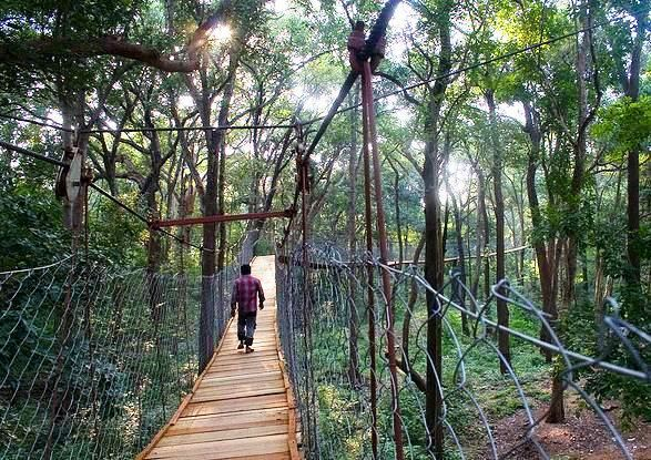 Sri Venkateswara National Park Bridge