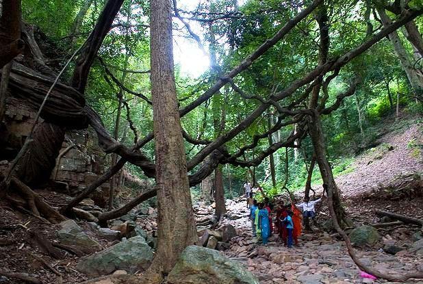 Sri Venkateswara National Park in Chittoor