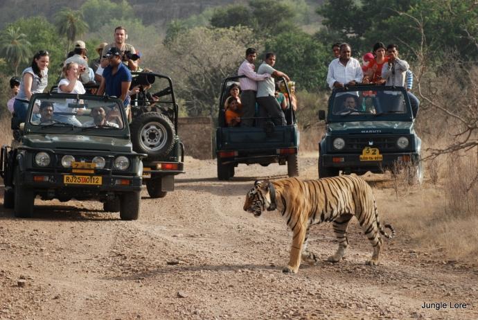 Indian Wildlife Sanctuary